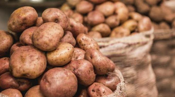 Especialistas crean tres nuevas variedades de papa fortificada, cinco veces más nutritiva que las tradicionales
