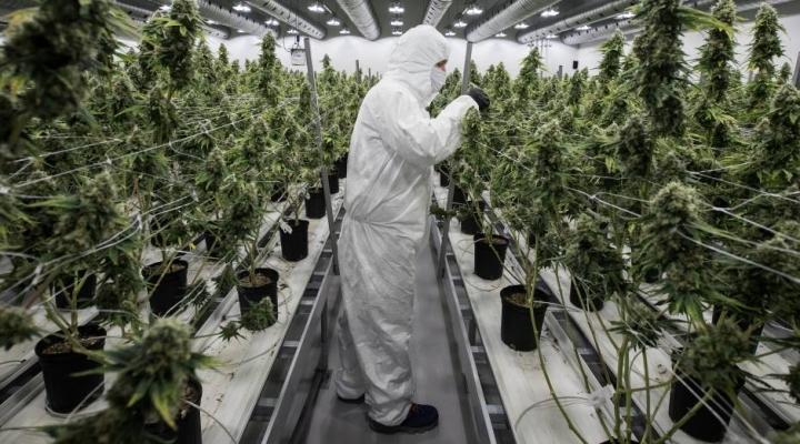 México da los primeros pasos para legalizar la marihuana
