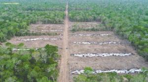Gobierno suspende asentamiento en zona protegida de Roboré