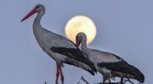"""Equinoccio de primavera y otoño: qué es la """"luna de gusano"""", la superluna que no se ve desde hace casi 40 años"""