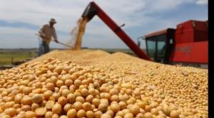 El Gobierno liberó la exportación de soya hasta el 60% de la producción nacional