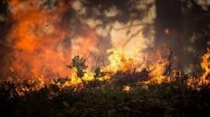 Incendio llega al valle de Tucabaca y declaran emergencia departamental a Santa Cruz  1
