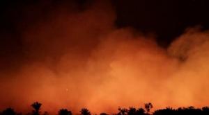 """Incendios en el Amazonas: 3 razones por las que esta región es tan importante (aunque realmente no sea """"el pulmón del mundo"""")"""