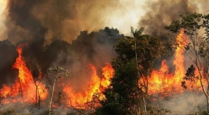 Incendios en el Amazonas: lo que se sabe de cómo se originaron los fuegos que causan estragos en la región