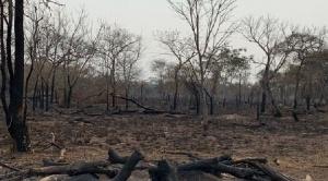 Ambientalistas e indígenas apuntan a Evo Morales como responsable de los incendios forestales   1
