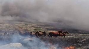 Mesa demanda cinco medidas inmediatas para enfrentar incendios en la Chiquitanía 1