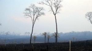 ¿Cuántas hectáreas ya fueron convertidas en cenizas en cada municipio de la Chiquitania? 1