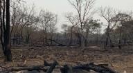Ambientalistas e indígenas apuntan a Evo Morales como responsable de los incendios forestales