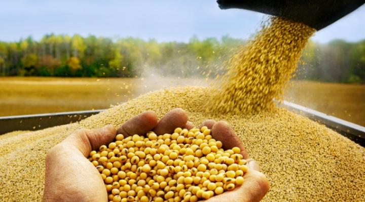 La exportación de alimentos genera $us594 MM y proponen al gobierno alentar al sector para vencer la crisis