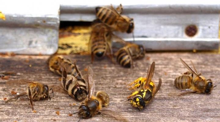 Apicultores denuncian que reducción de población de abejas se debe al uso de agroquímicos