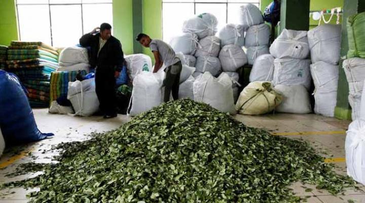 Cocaleros de Yungas ahora disputan el control del mercado de la coca