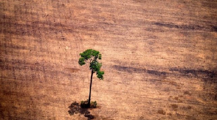 El estudio que muestra la masiva extinción de plantas (y su posible efecto cascada con millones de especies animales)