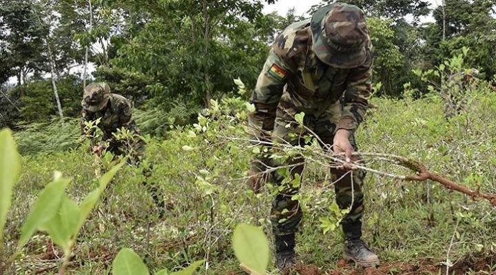 Ministro López anuncia inició de erradicación de coca excedentaria el 20 de enero, cocaleros del Trópico cochabambino aceptan el reinicio de tareas