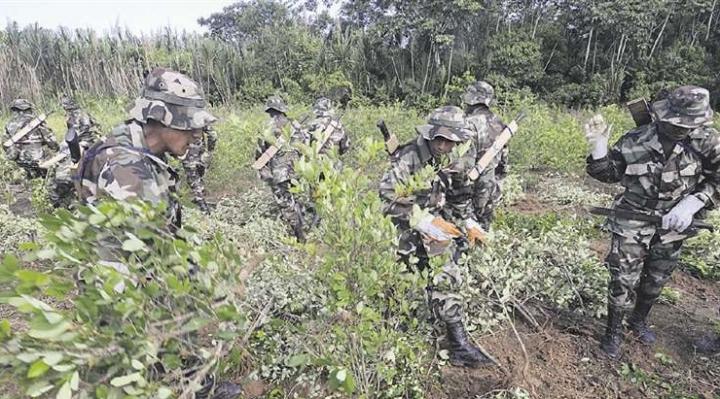 Autoridades difieren sobre inicio de tareas de erradicación de cultivos de coca ilegales
