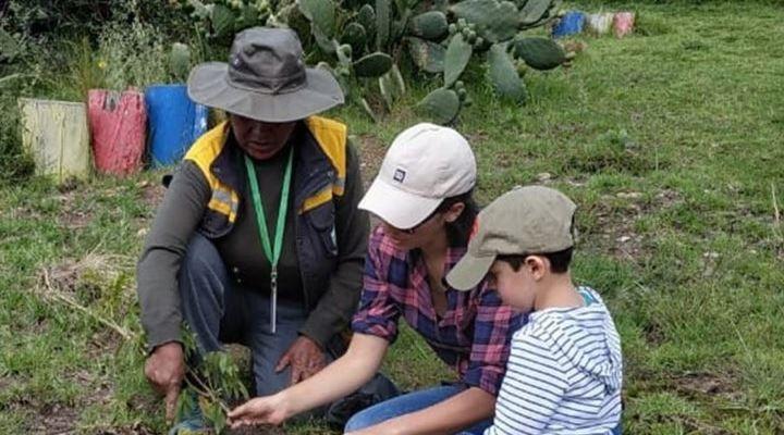 Se reforestarán los parques de la ciudad de La Paz con keñuas y tacarcayas
