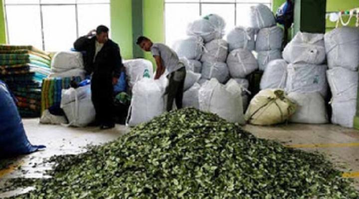 Adepcoca reactiva con medidas de bioseguridad venta de hoja de coca a nivel nacional