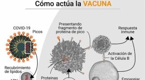 Cómo la tecnología molecular de ARN mensajero cambiará el curso de varias enfermedades 1