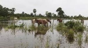 Lluvias causan daños en cuatro departamentos; Beni es el más afectado