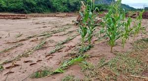 El Ministerio de Desarrollo Rural informó que el fenómeno de La Niña provocó pérdidas en el sector agrícola y ganadera