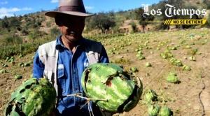 Cochabamba: afectados por granizada anuncian que demorarán 4 meses en recuperar pérdidas