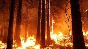 Incendios en la Chiquitanía de 2019 cobraron la vida de casi 6 millones de mamíferos