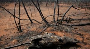 Director de Biodiversidad: es imposible un repoblamiento de animales en el bosque chiquitano