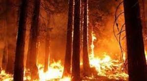 """Permisos para """"quemas controladas"""" fenece el 30 de junio y la ABT anuncia sobrevuelos de inspección"""