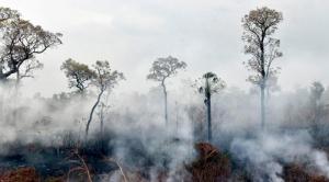 Defensa anuncia plan de prevención de incendios forestales con apoyo de las Fuerzas Armadas