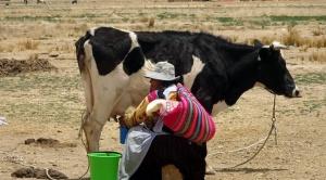 El contrabando inmoviliza tres millones de toneladas de leche y baja 25% la demanda en Santa Cruz