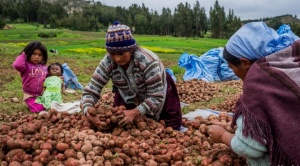 Millones de pequeños productores son afectados por la sequía, los bajos precios y el contrabando
