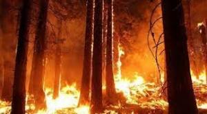 """ABT afirma que solo el 38% de quemas fue autorizada y """"no tiene mayor incidencia"""" en los incendios forestales"""