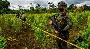 Por qué en Colombia se está produciendo más cocaína si hay menos cultivos de coca