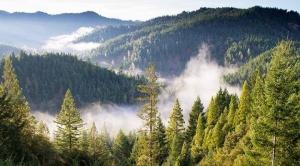 Lanzan el Premio al Reportaje sobre Biodiversidad 2021 con una nueva categoría