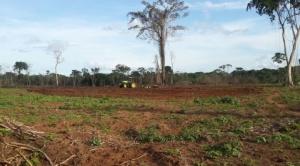 Empresarios y campesinos son parte del proceso de expansión de la frontera agrícola en Pando