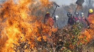 Concepción, San Matías y San Ignacio de Velasco con más focos de calor y donde se busca apagar el fuego