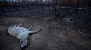 Incendios persisten, pero autoridades aseguran que se reducen focos de calor en la Chiquitania