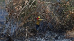 Gobernación de Santa Cruz reporta que incendios afectaron más de dos millones de hectáreas en la Chiquitanía