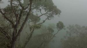 Ante incendio forestal en Parque Nacional Madidi  Gobernación de La Paz pide apoyo a Defensa Civil