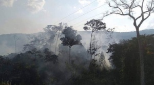 Sospechan que chaqueos serían principal causa del incendio en el Madidi