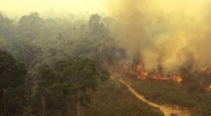 Cumbre de Bosques pide juicio para Evo por incendio en la Chiquitania y llevará el caso a Tribunal Internacional de la Naturaleza