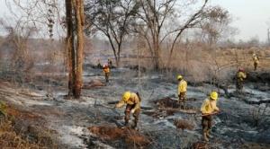 Gobierno central y gobernación cruceña anuncian planes para reforestar la Chiquitanía dentro de la etapa postincendio