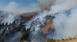 """Cedla atribuye los incendios de la Chiquitania a la """"obsesión gubernamental"""" por la ampliación de la frontera agrícola"""