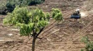 Autoridades de Estado descartan anular normas sobre desmontes y dotación de tierras, aunque se abren a un debate