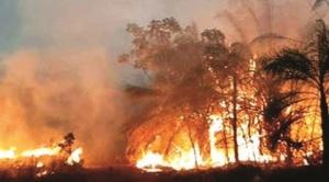 Chiquitanía: se registran tres nuevos focos de calor en Concepción, luego que Evo Morales declarara al país libre de incendios
