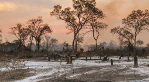 Chiquitanía: 20% de superficie que se quemó pertenece a grandes empresas agropecuarias y 50% es tierra fiscal