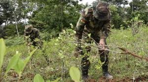 Ministro López anuncia inició de erradicación de coca excedentaria el 20 de enero, cocaleros del Trópico cochabambino aceptan el reinicio de tareas 1