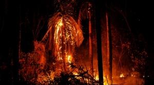 """Medioambientalistas elaborarán proyecto de ley para abrogar normas """"ecocidas"""""""